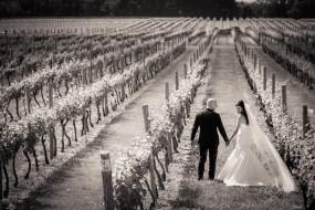 Bedell Cellars wedding couple at Long Island vineyard